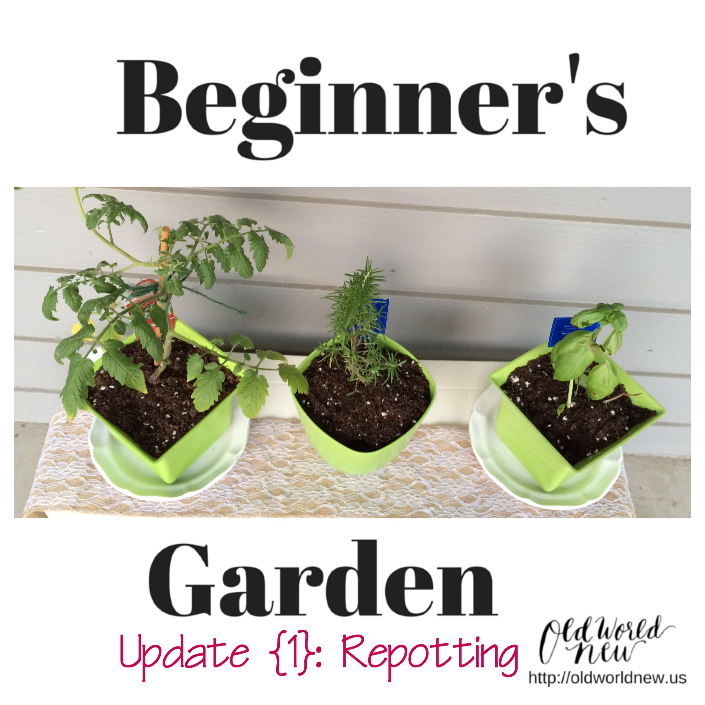 Beginner's Garden Update {1}: Repotting Growing Plants