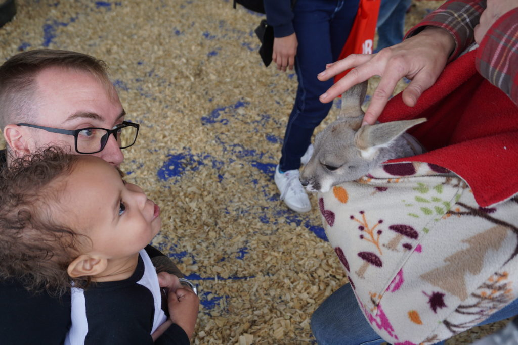 petting zoo at earthX in dallas, TX with Tiny Green Earthling, Greyson King - via old world new