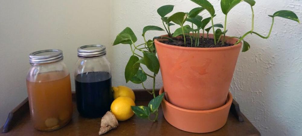 Elderberry Syrup immune boosting recipes