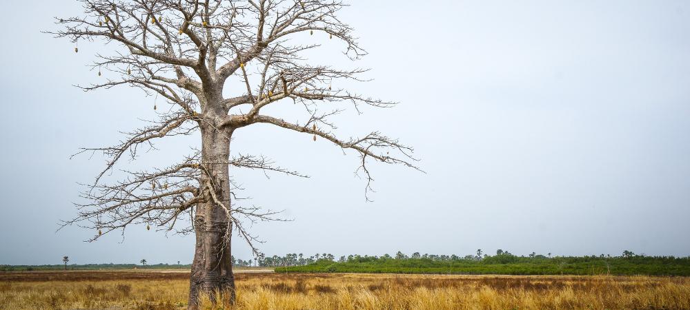 environmental fundraiser - trees for the future - forest garden program - Senegal, Africa