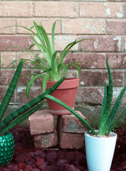 5 Houseplants That Are Native to Africa