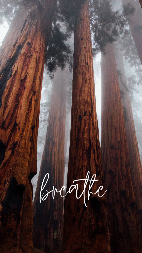 breathe - iPhone screen saver - Old World New