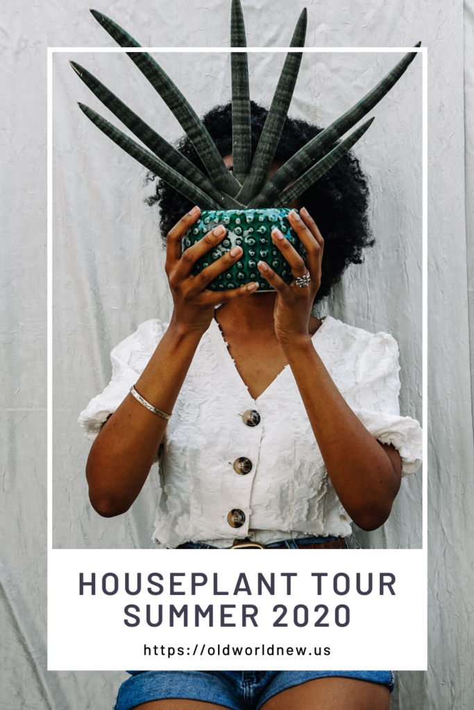 houseplant tour summer 2020 - old world new