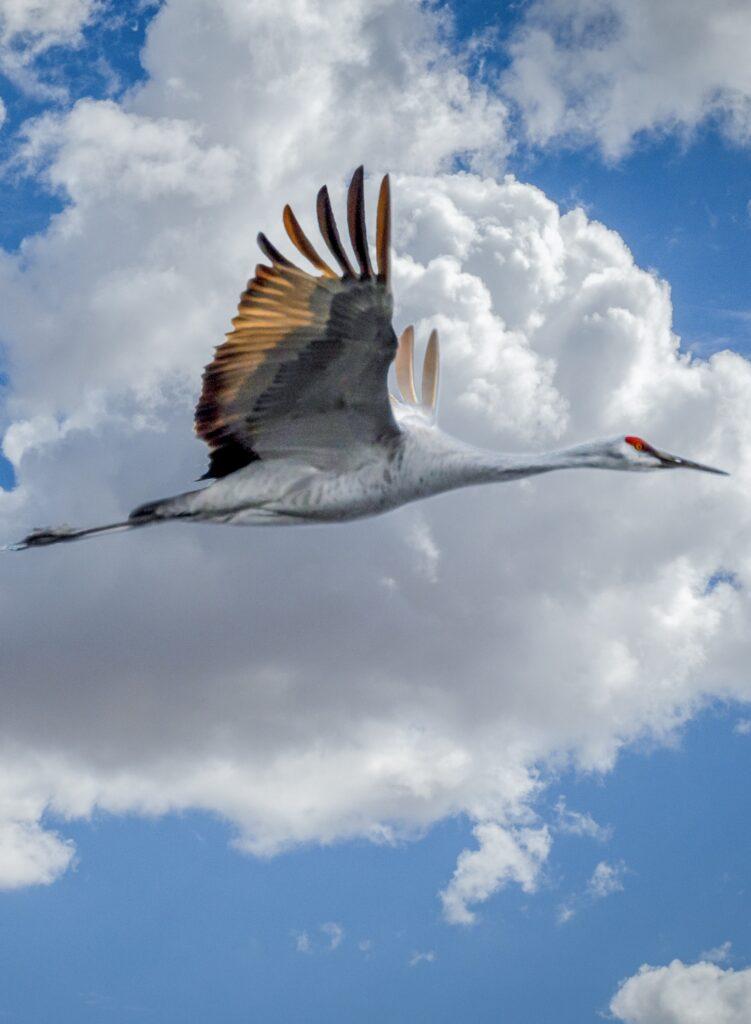 migratory birds - lights off Texas
